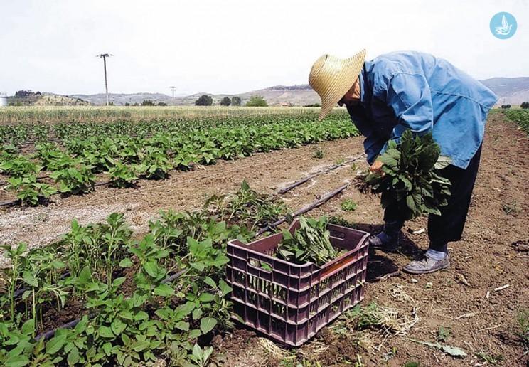 Αποτέλεσμα εικόνας για Υπομέτρο 6.3 «Ανάπτυξη μικρών γεωργικών εκμεταλλεύσεων»